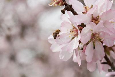 花粉媒介者の健康と生物多様性を支援する助成金プログラムを創設